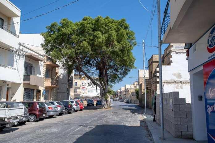 Tree Balzan