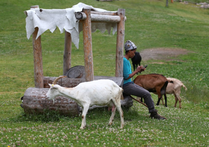 Ethiopian Agitu Idea Gudeta, 40, uses her mobile phone as she follows her goat herd through the mountain at Valle dei Mocheni near Trento