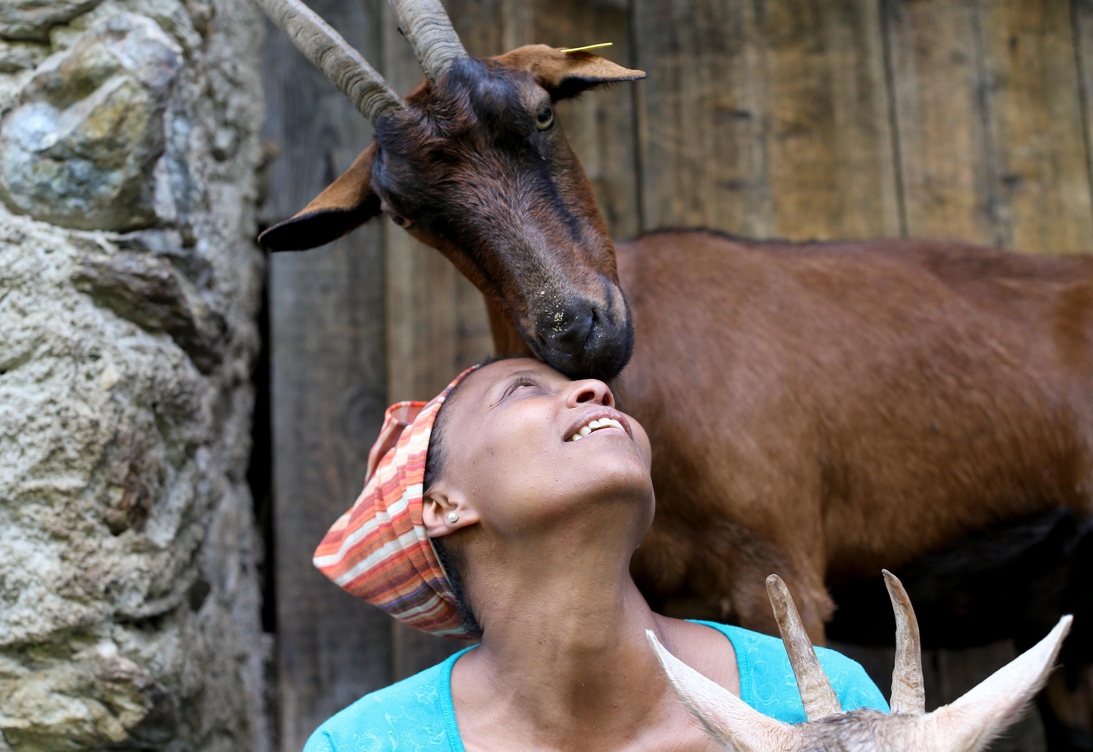 A Mochena goat nuzzles up to Ethiopian Agitu Idea Gudeta, 40, at the her stable at the Valle dei Mocheni near Trento
