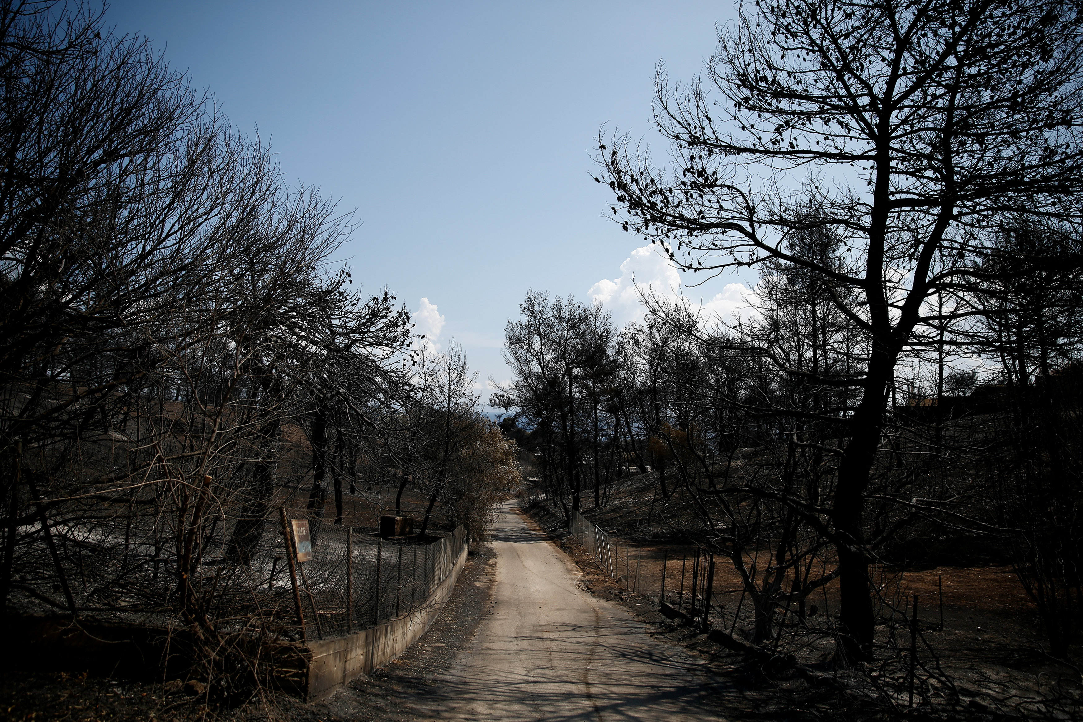 Burnt trees are seen along a road following a wildfire in the village of Mati, near Athens
