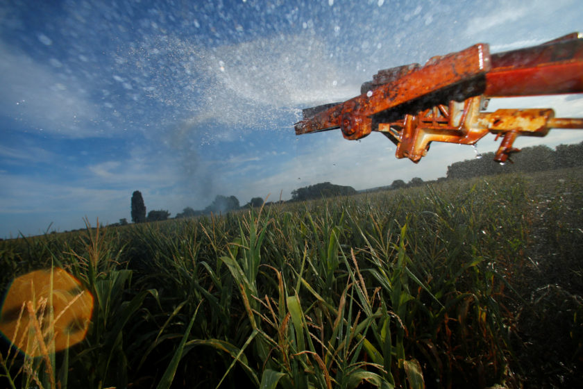 A corn field is irrigated near Geinsheim