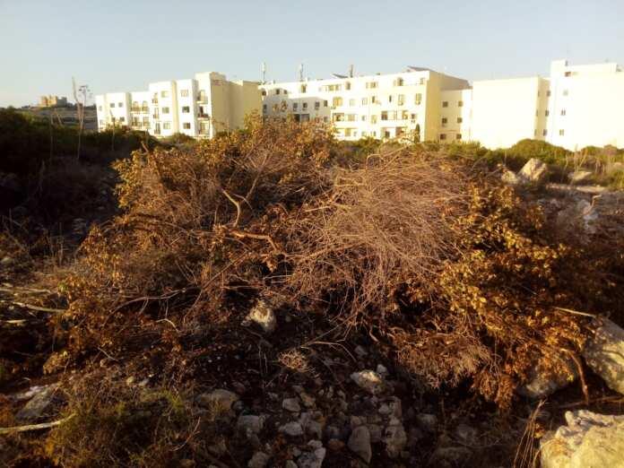 Xogħol illegali Xemxija