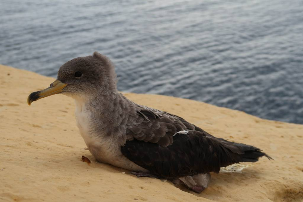 What to do if you see a stranded seabird - Newsbook