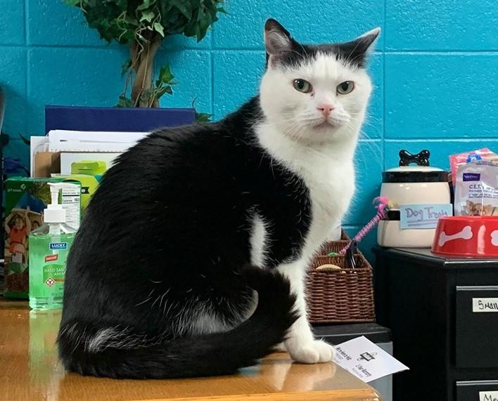 'World's worst cat' finally finds a home - Newsbook