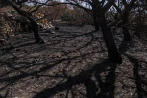 Ahrax-Mellieha-fire