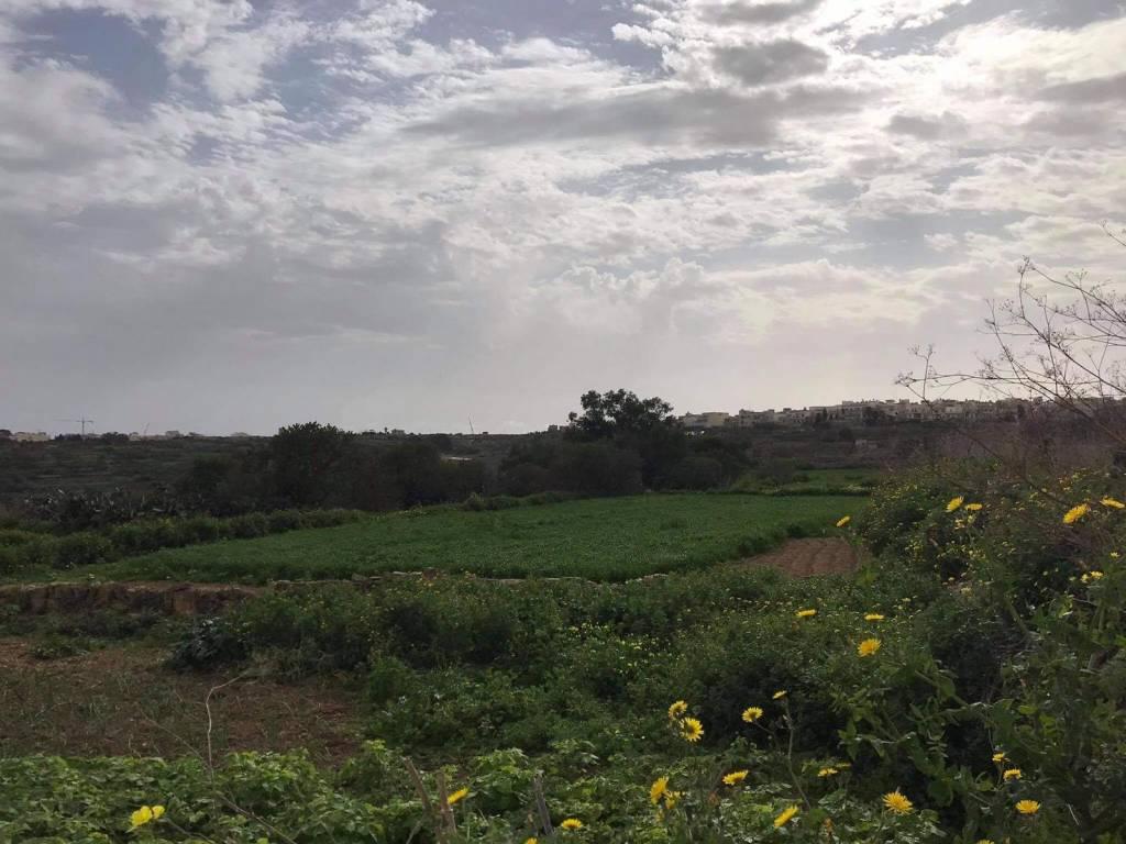 Triq il-Qortin nadur fields