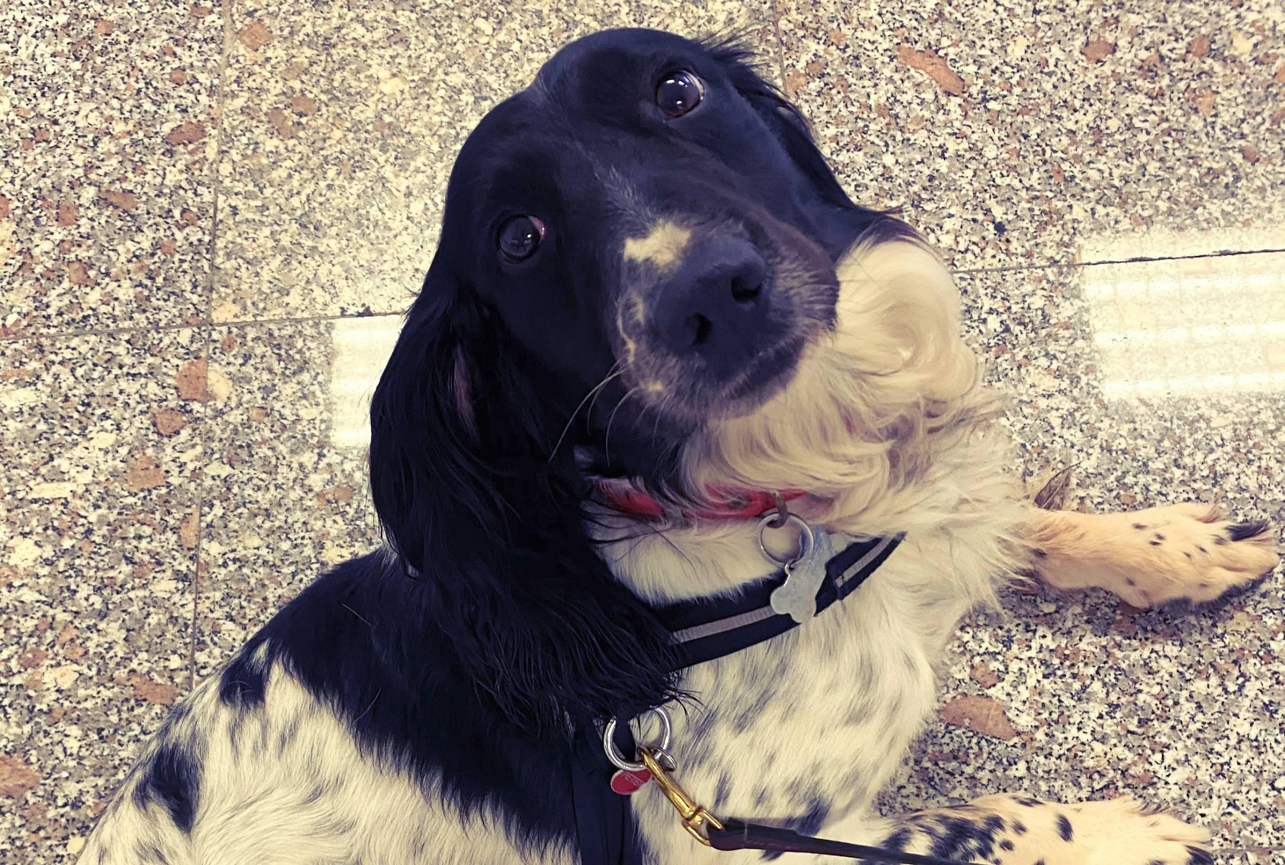 Peter wins Best Dog in Uniform award during Malta's Animal Honours Awards -  Newsbook