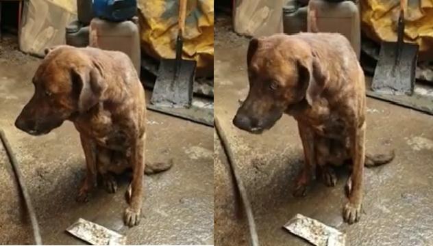 dog Animal Welfare